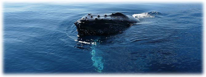 Whale Watching Tour Los Cabos